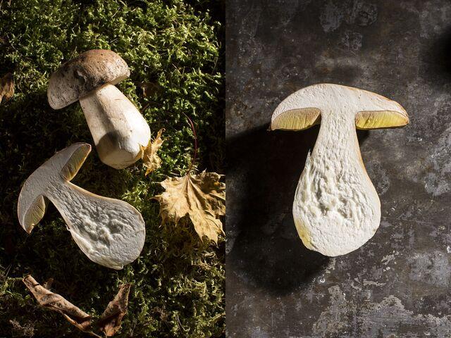 Фотосъемка грибной композиции. Фуд-стилист Слава Поздняков